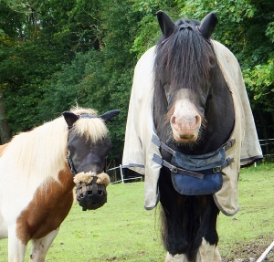 Ponies with anti fly gear on