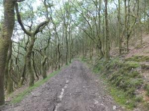 Parc Cwm Darran twisted oaks Coed Deri Newydd