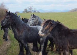 Ponies in the field on the way to Bettws Newydd