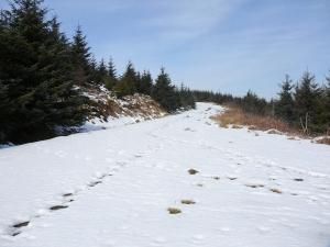 snowy tracks patrishow