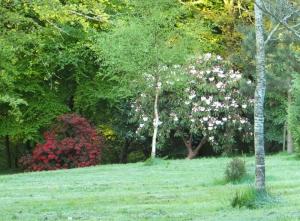 Wenvoe rhododendrons at Coedarhydyglyn