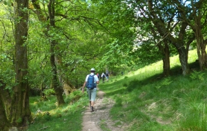 Walking through Coed Dyffryn
