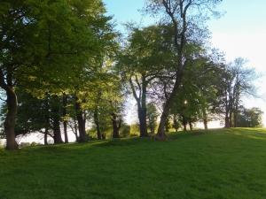 Wenvoe trees old Coedarhydyglyn