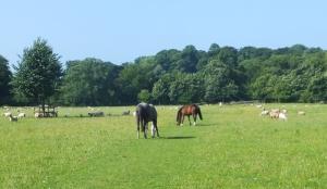 20 mile walk meadow leading to New Inn Bridge