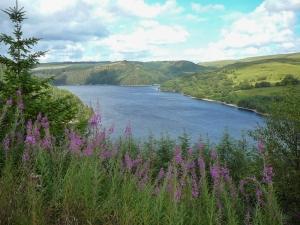 Overlooking Llyn Brianne