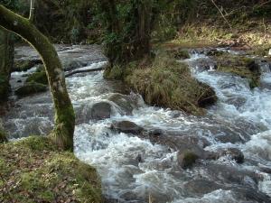 Cwm Camlais stream