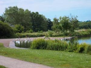 Cosmeston bottom lake