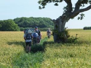 Passing through wheat fields