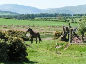 Horse near lake - Mynydd Illtud