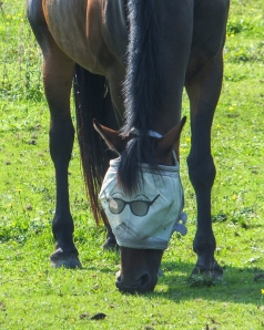 Hip looking horse in sunglasses