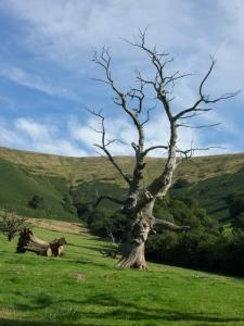 Landscape near Llanthony Priory