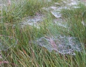 Spiders webs Cwm Callan