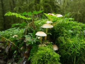 Moss And Fungi - Cwm Calan