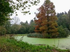Cwm Cayo Pond