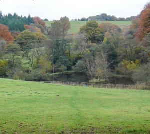 Pond south of Henllys Church