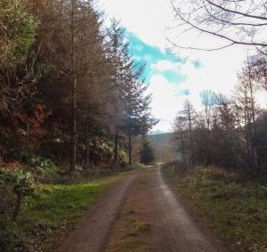 Forestry track Craig y Glyn