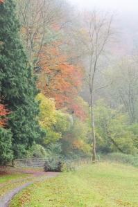 Woodland below Coldwell Rocks