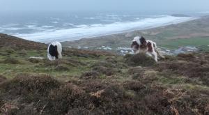 Windswept Rhossili Down