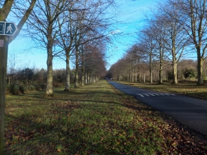 Avenue of Beeches Leigh House