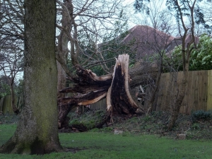 Tree down in Thompsons Park