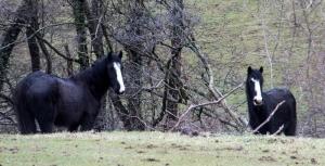 Attractive horses
