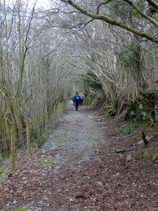 Llanthony Wood