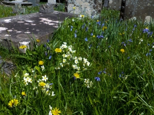 Spring flowers St Teilo's Church