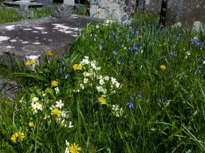 Spring flowers St Teilo's Church