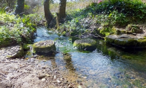 Stepping stones at Marcross Brook