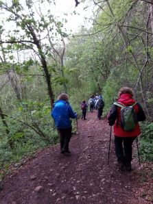 Descending through Fforest Fawr