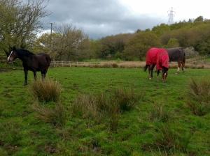 Horses near Waun-waelod