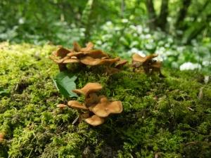 Fungi - near Parkmill