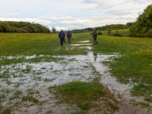 Boggy meadow