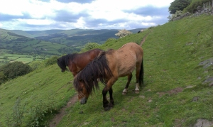 Mountain ponies