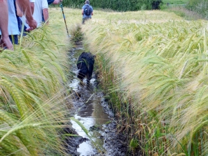 Patch wades through the muck