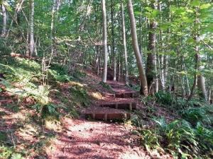 Climbing up into Park Wood