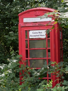 Red Phone box surrounded by brambles