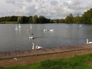 Swans and model yachts