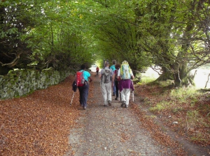 Down the avenue towards Cefn Rhyswg