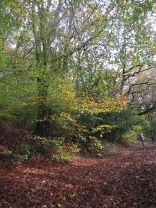 Coed y Lan Wood