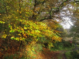 Autum in Coed y Lan Wood