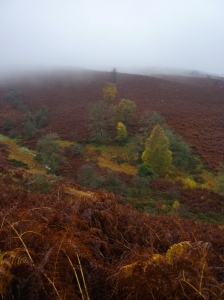 Lovely bracken slopes
