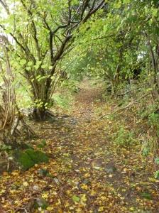 Woodland near Ty-Cynfin Farm