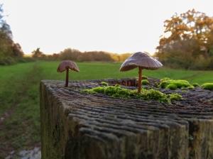 Miniature fungi Millfields