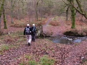 Crossing Cannop Brook
