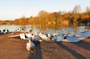 Cosmeston east lake