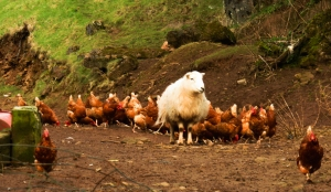 Cefn Onn Farmyard