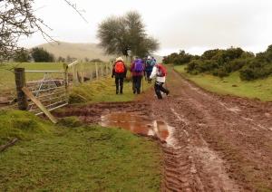 Muddy tracks beside Traeth Mawr