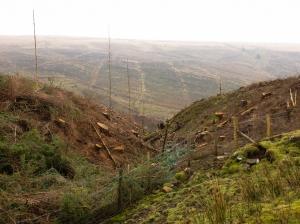 Top of Cwm Callan
