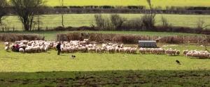 Farmer and his sheep